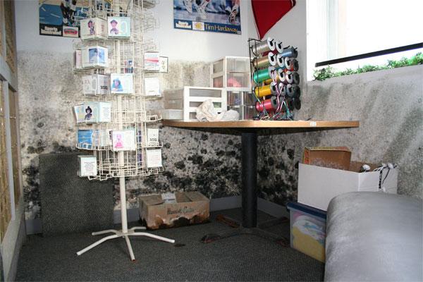 beseitigung schimmelpilz schimmelpilzbek mpfung und schimmelpilzsanierung wien graz. Black Bedroom Furniture Sets. Home Design Ideas