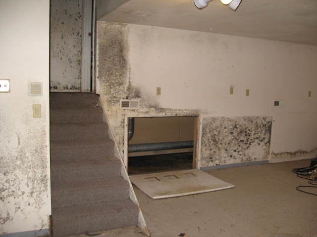 schimmel enfernung mold remediation schimmelpilz sanierung schimmelpilz nach wasserschaden. Black Bedroom Furniture Sets. Home Design Ideas